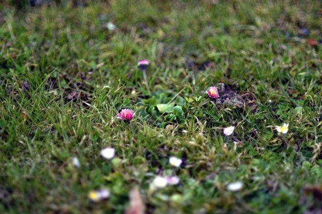 Blume und Laub