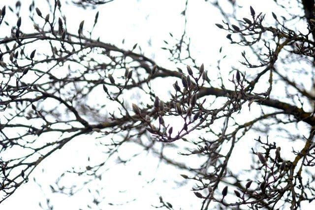 treibender Baum